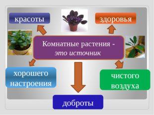 Комнатные растения - это источник красоты здоровья хорошего настроения доброт
