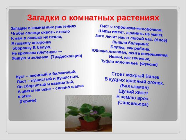 Загадки о комнатных растениях Загадки о комнатных растениях Чтобы солнце скво...