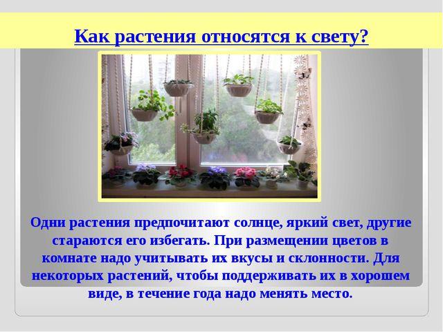 Как растения относятся к свету? Одни растения предпочитают солнце, яркий свет...