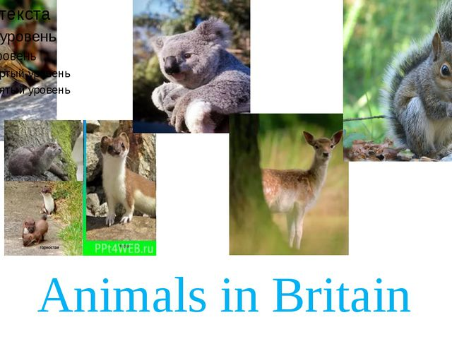 Animals in Britain