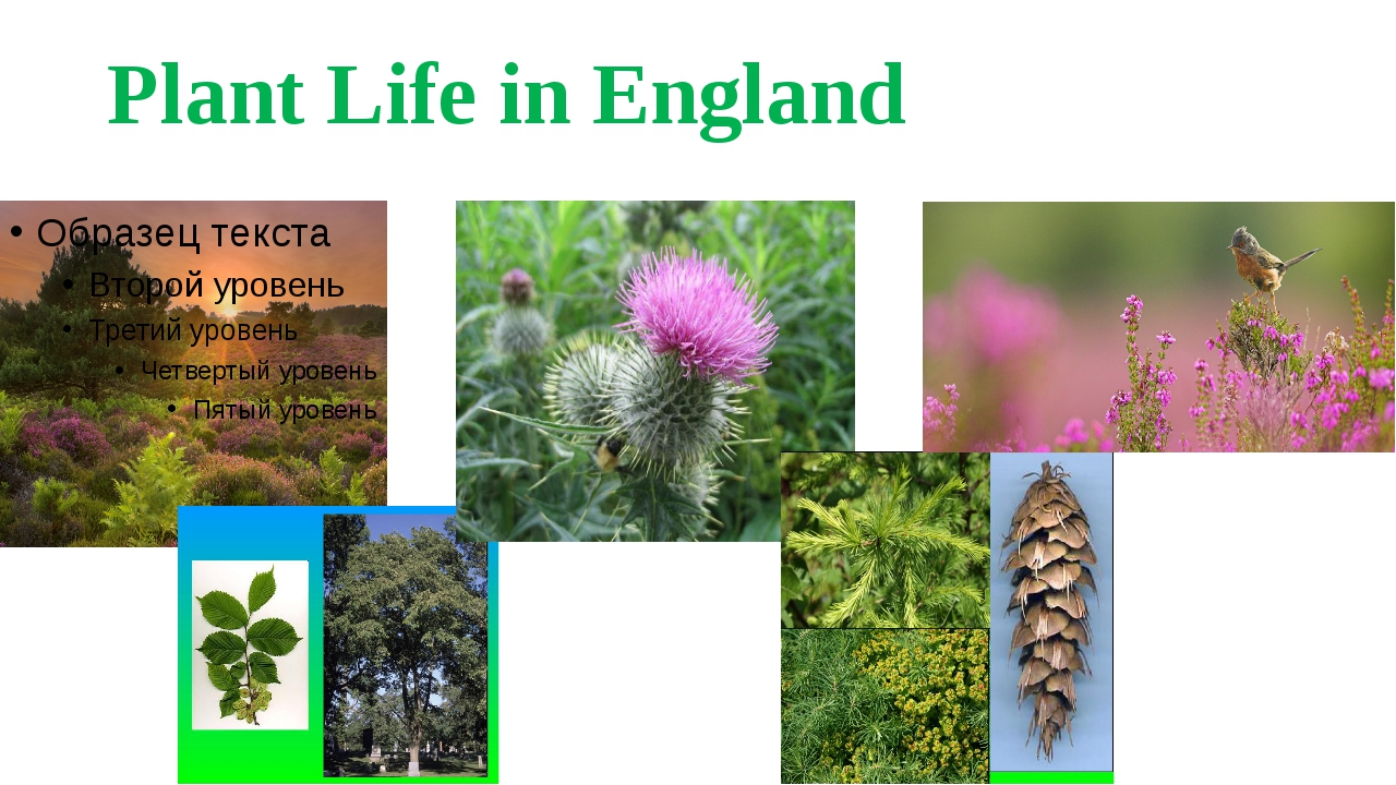 Plant Life in England