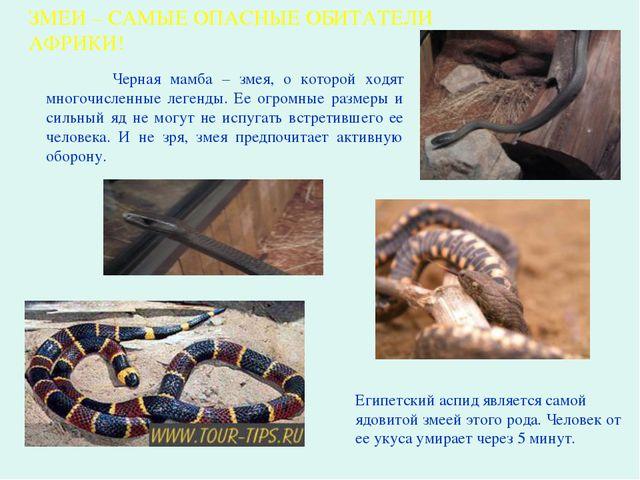 Черная мамба – змея, о которой ходят многочисленные легенды. Ее огромные раз...