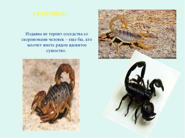 Издавна не терпит соседства со скорпионами человек – еще бы, кто захочет име...