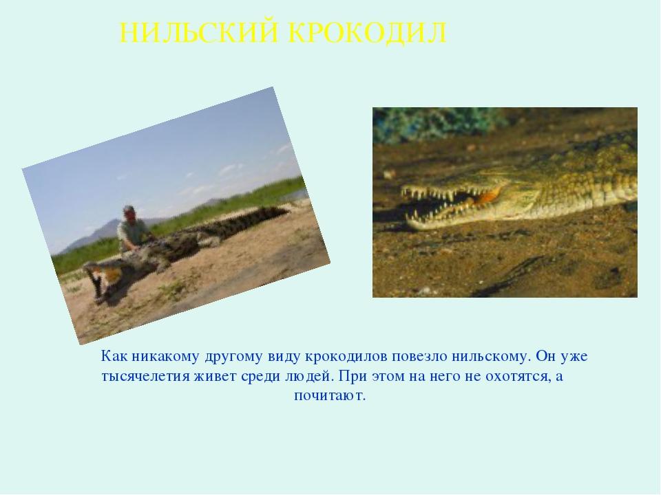 Как никакому другому виду крокодилов повезло нильскому. Он уже тысячелетия ж...