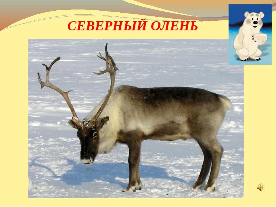 Большие рога, высокие ноги. Он ходит по снегу, совсем без дороги. Помочь чело...