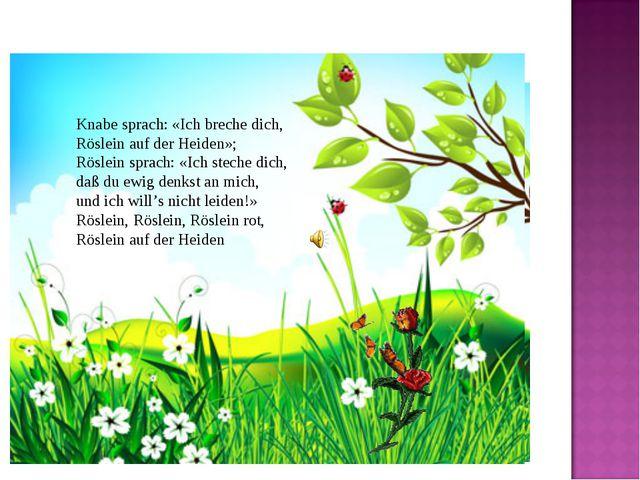 Knabe sprach: «Ich breche dich, Röslein auf der Heiden»; Röslein sprach: «I...