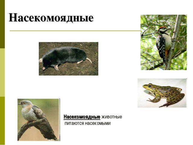 Насекомоядные Насекомоядные животные питаются насекомыми