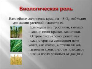 Важнейшее соединение кремния – SiO2 необходим для жизни растений и животных.