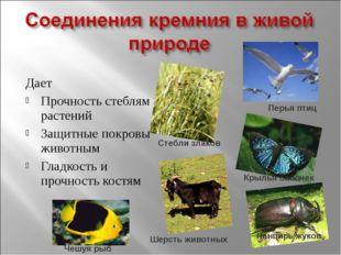 Дает Прочность стеблям растений Защитные покровы животным Гладкость и прочнос
