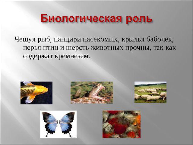 Чешуя рыб, панцири насекомых, крылья бабочек, перья птиц и шерсть животных пр...