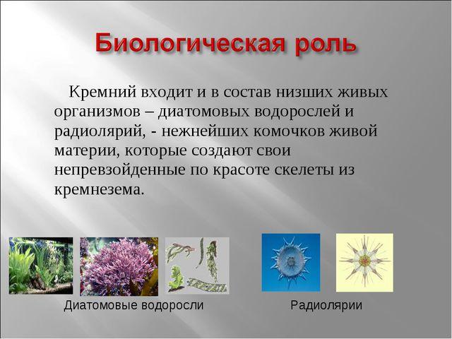 Кремний входит и в состав низших живых организмов – диатомовых водорослей и...