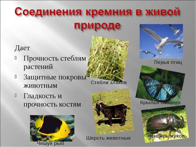 Дает Прочность стеблям растений Защитные покровы животным Гладкость и прочнос...
