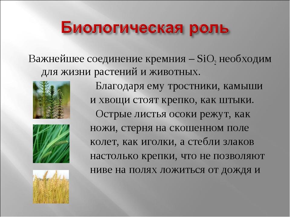 Важнейшее соединение кремния – SiO2 необходим для жизни растений и животных....