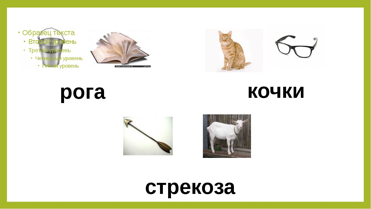 рога кочки стрекоза