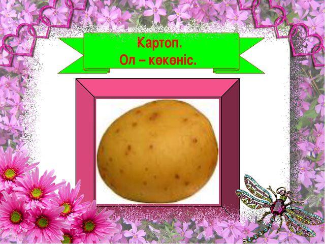 Картоп. Ол – көкөніс.