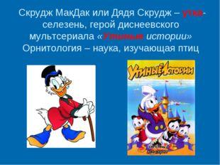 Скрудж МакДак или Дядя Скрудж – утка-селезень, герой диснеевского мультсериа
