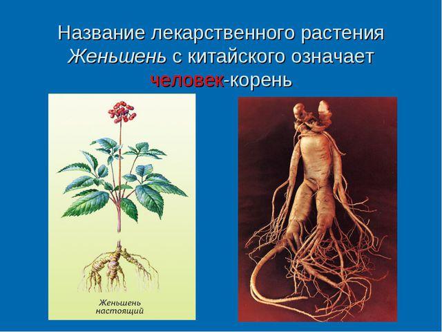 Название лекарственного растения Женьшень с китайского означает человек-корень