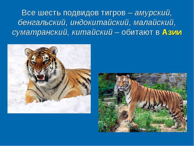 Все шесть подвидов тигров – амурский, бенгальский, индокитайский, малайский,...