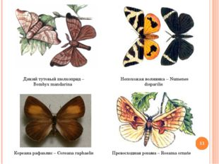 Дикий тутовый шелкопряд – Bombyx mandarina Непохожая волнянка – Numenes dispa
