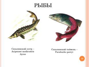 РЫБЫ Сахалинский таймень – Parahucho perryi Сахалинский осетр – Acipenser med