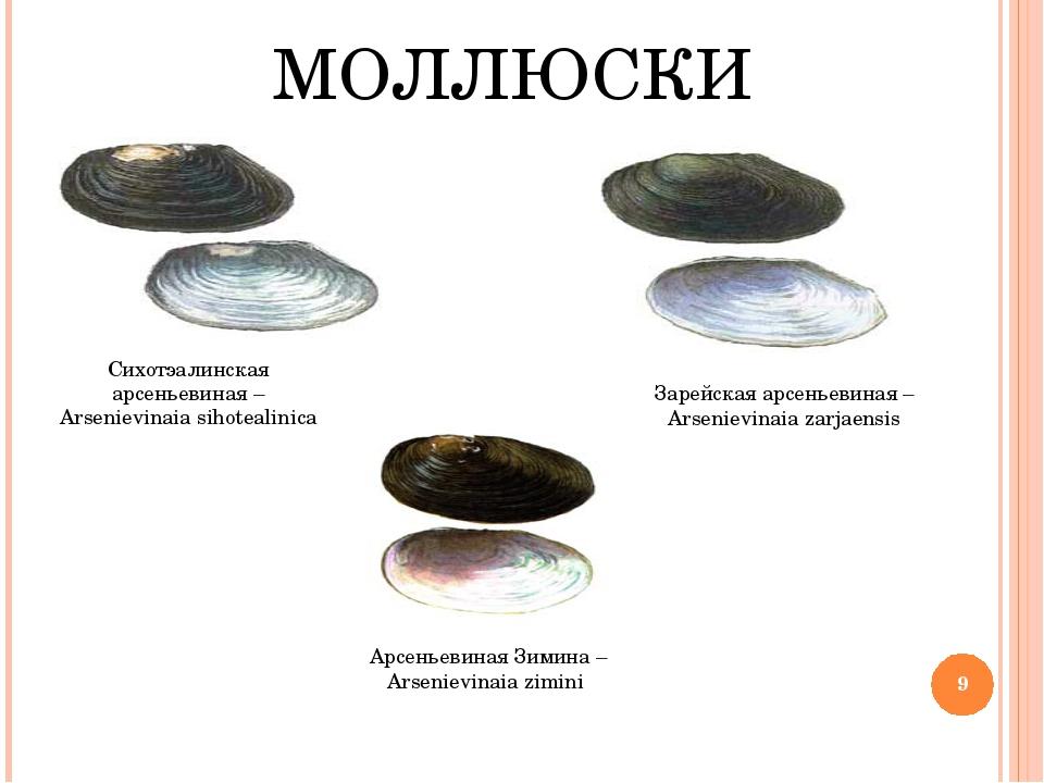 МОЛЛЮСКИ Сихотэалинская арсеньевиная – Arsenievinaia sihotealinica Арсеньевин...