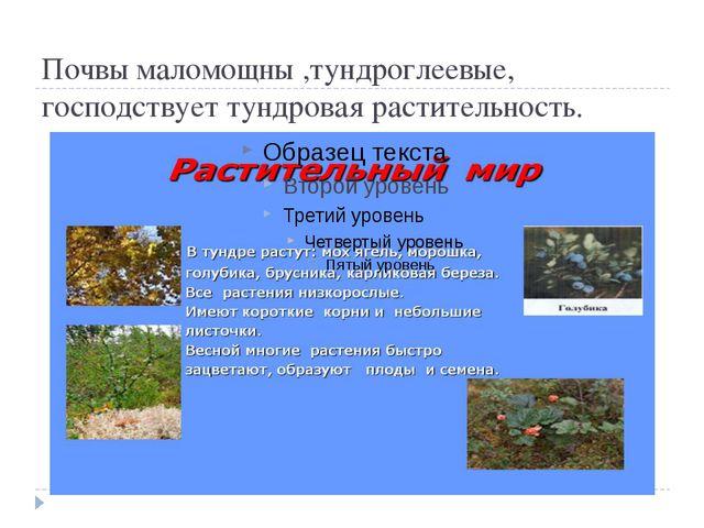 Почвы маломощны ,тундроглеевые, господствует тундровая растительность.