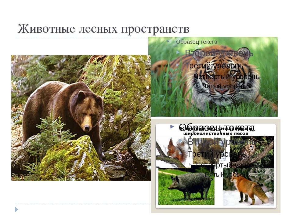 Животные лесных пространств