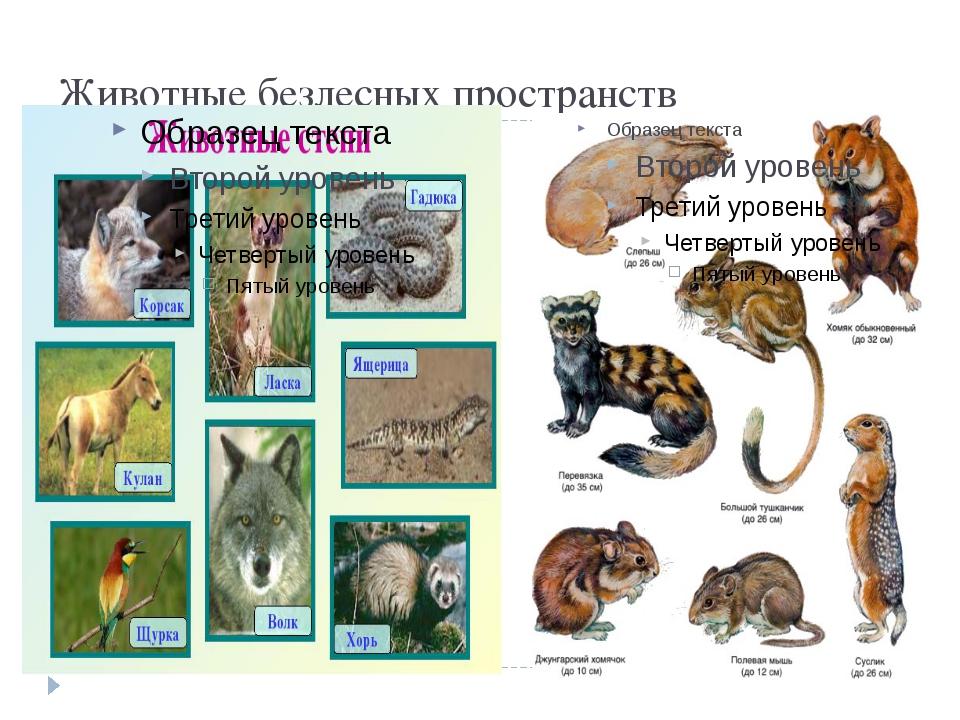 Животные безлесных пространств