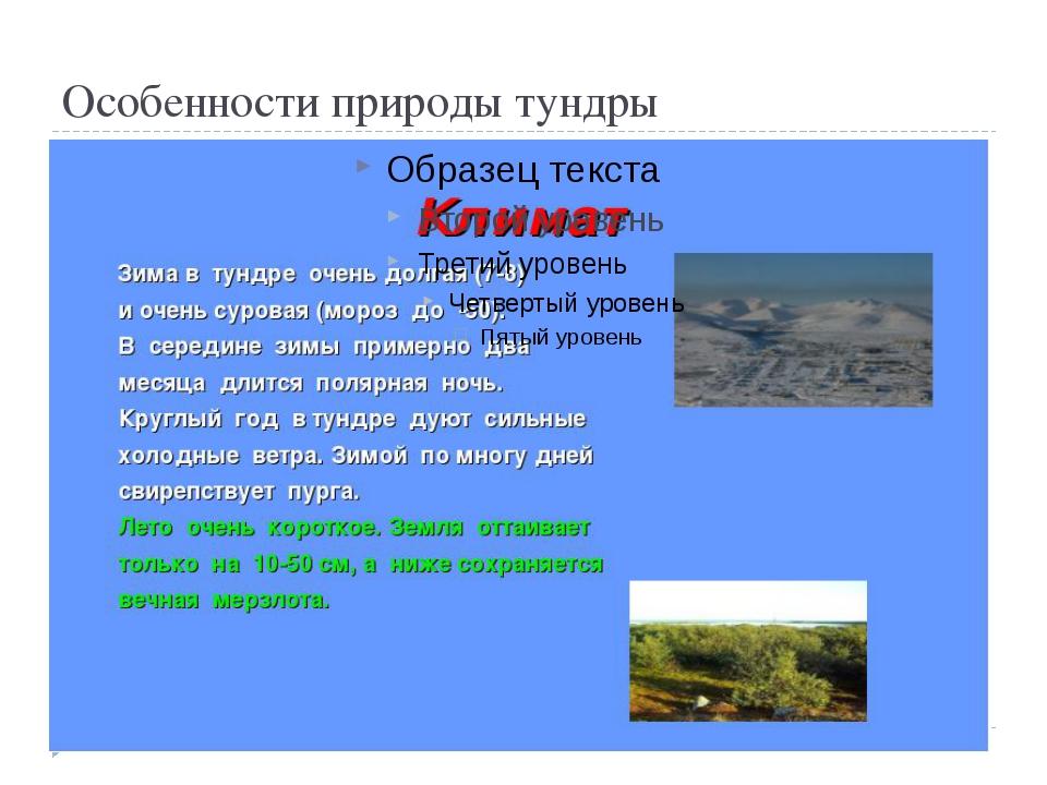 Особенности природы тундры