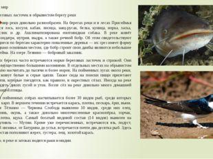 Животный мир Норки береговых ласточек в обрывистом берегу реки Животный мир р