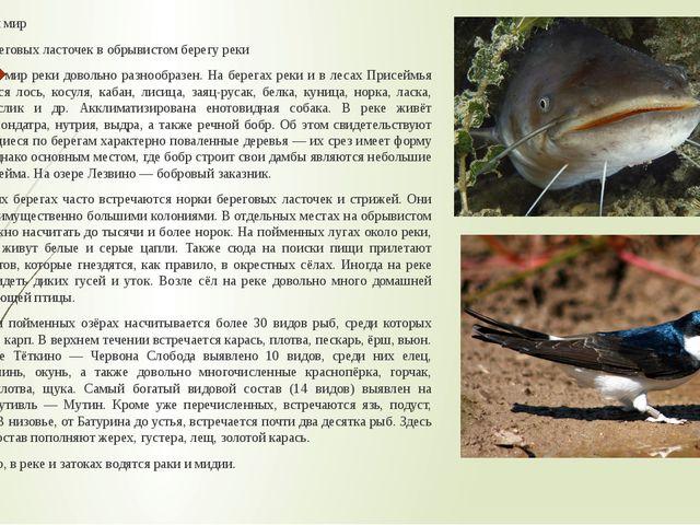 Животный мир Норки береговых ласточек в обрывистом берегу реки Животный мир р...