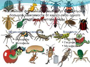 Жизненные формы насекомых могут находиться в большой зависимости от какого-ли