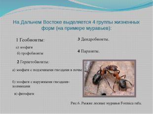 На Дальнем Востоке выделяется 4 группы жизненных форм (на примере муравьев):