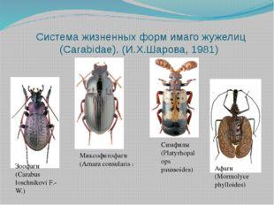 Система жизненных форм имаго жужелиц (Carabidae). (И.Х.Шарова, 1981) Зоофаги