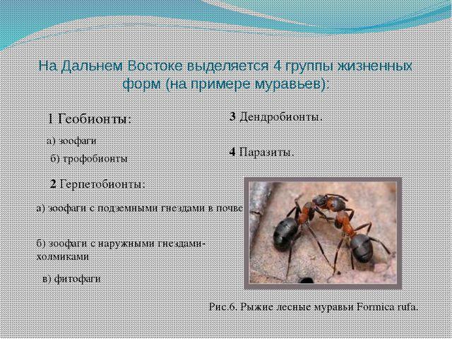 На Дальнем Востоке выделяется 4 группы жизненных форм (на примере муравьев):...