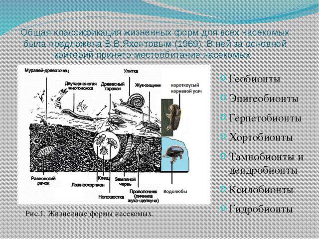 Общая классификация жизненных форм для всех насекомых была предложена В.В.Яхо...