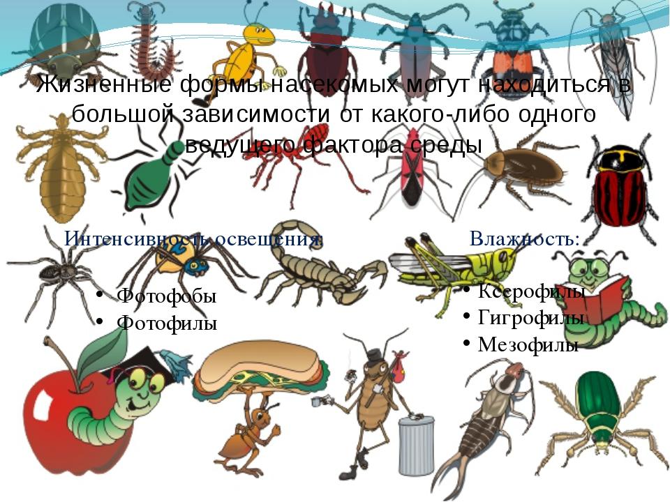 Жизненные формы насекомых могут находиться в большой зависимости от какого-ли...