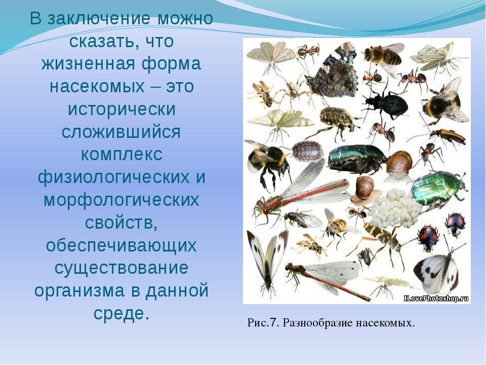 В заключение можно сказать, что жизненная форма насекомых – это исторически с...