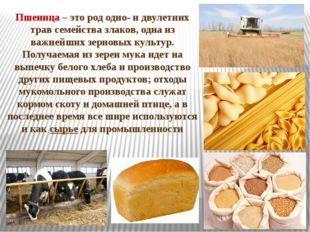 Пшеница – этород одно- и двулетних трав семейства злаков, одна из важнейших