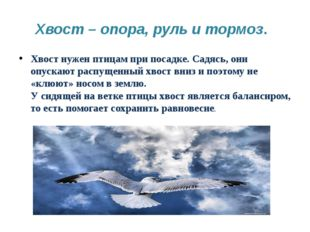 Хвост – опора, руль и тормоз. Хвост нужен птицам при посадке. Садясь, они опу