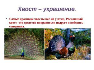 Хвост – украшение. Самые красивые хвосты всё же у птиц. Роскошный хвост- это