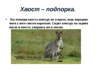 Хвост – подпорка. Без помощи хвоста кенгуру не усидеть, ведь передние ноги у
