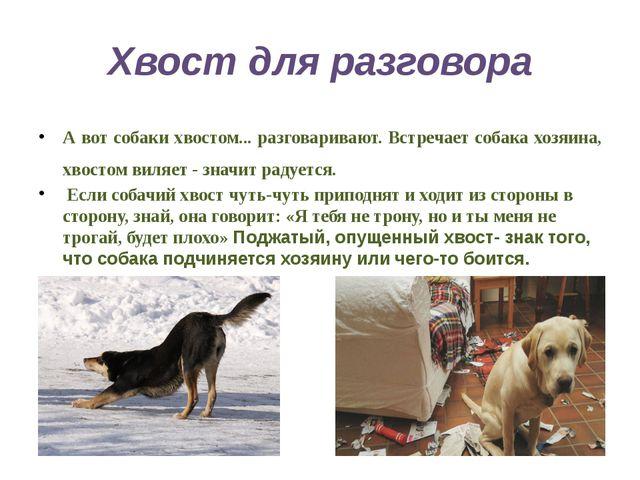 Хвост для разговора А вот собаки хвостом... разговаривают. Встречает собака х...