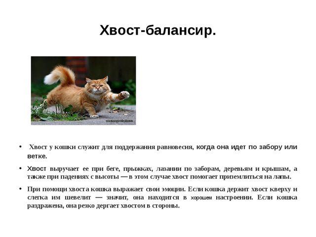 Хвост-балансир. Хвост у кошки служит для поддержания равновесия, когда она ид...