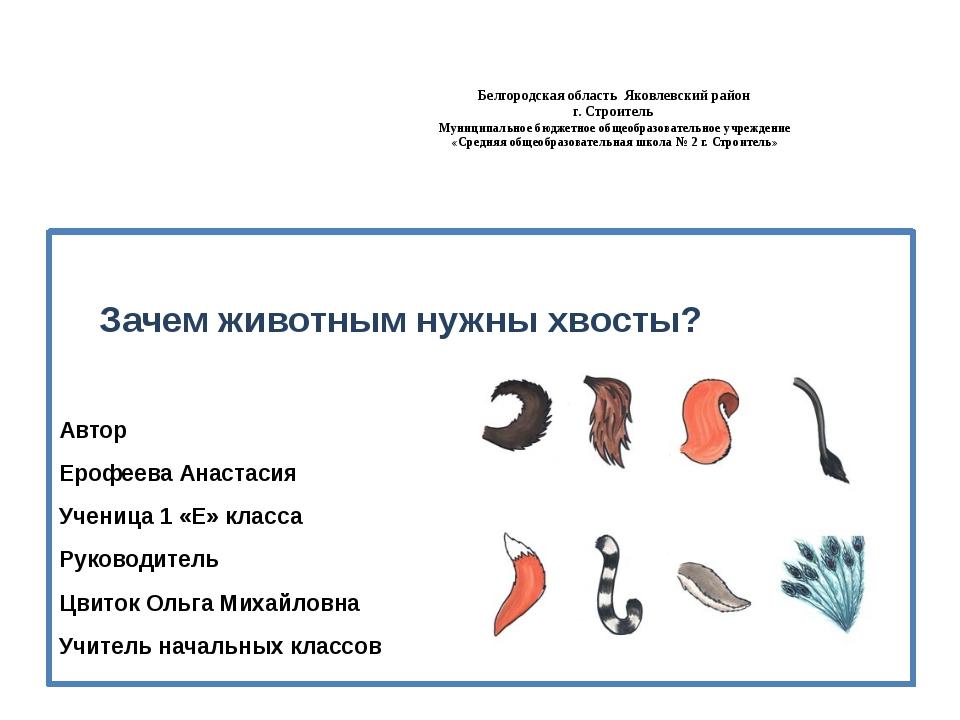 Белгородская область Яковлевский район г. Строитель Муниципальное бюджетное...