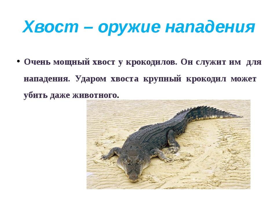 Хвост – оружие нападения Очень мощный хвост у крокодилов. Он служит им для на...