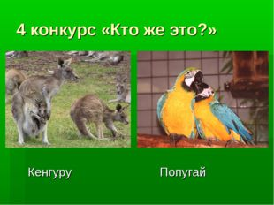4 конкурс «Кто же это?» Кенгуру Попугай