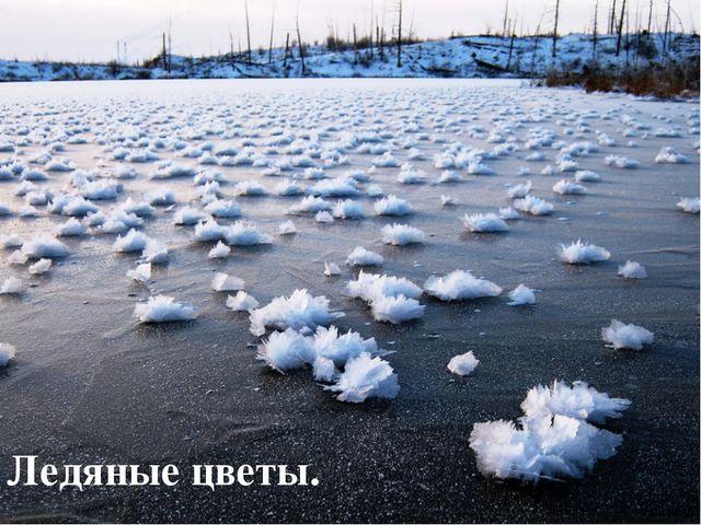 Ледяные цветы.