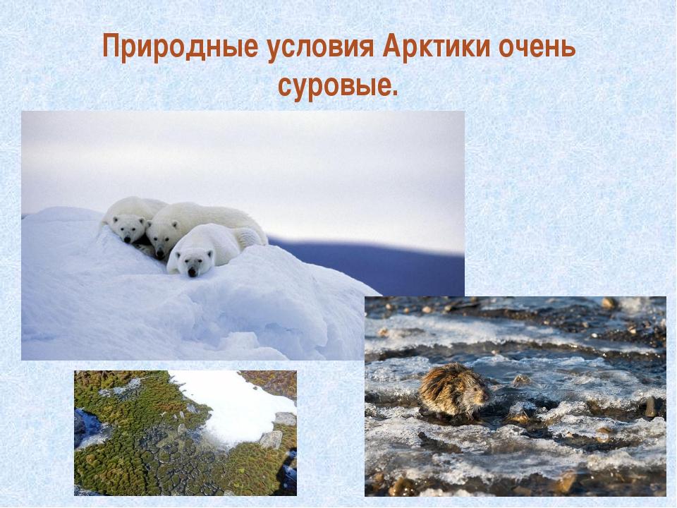 Природные условия Арктики очень суровые.