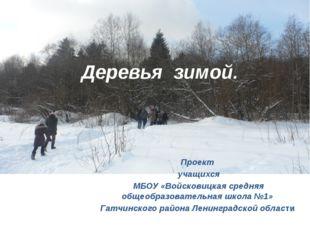 Деревья зимой. Проект учащихся МБОУ «Войсковицкая средняя общеобразовательная